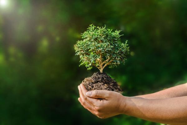 Diferencia entre Derecho Ambiental y Derecho Ecológico - Qué es el Derecho Ambiental