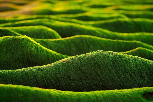 ¿Las algas son plantas? - Las características de las algas