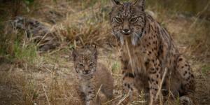 Especies endémicas: definición y ejemplos