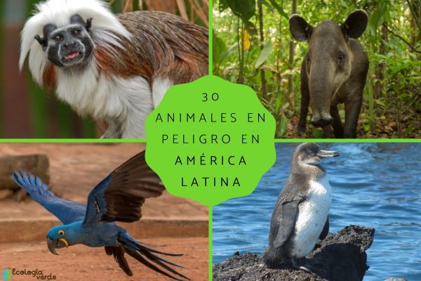 Animales en peligro de extinción en América Latina