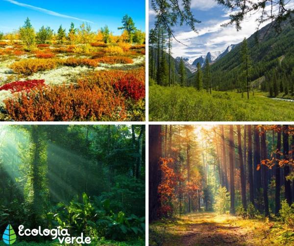Tipos de vegetación - Tipos de vegetación según el bioma en el que se encuentra