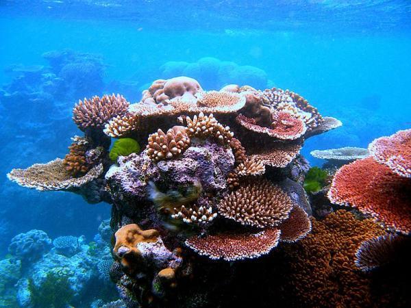 14 animales sin cerebro: lista y fotos - Corales marinos, uno de los animales sin cerebro más curiosos