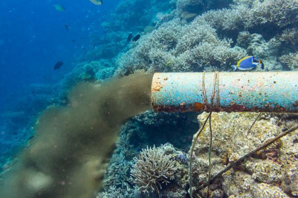 Causas y consecuencias de la contaminación del mar