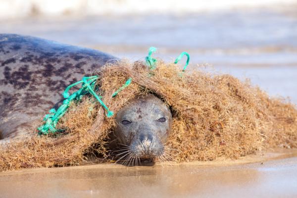 Causas y consecuencias de la contaminación del mar - Consecuencias de la contaminación del mar