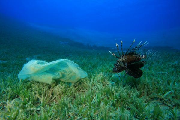 Causas y consecuencias de la contaminación del mar - Qué es la contaminación del mar