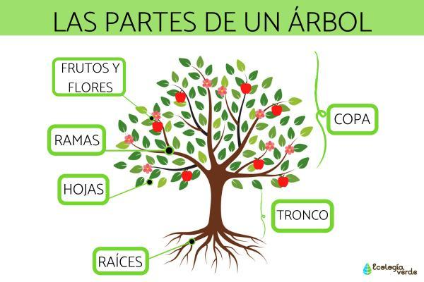 Tipos de árboles - Características de los árboles y sus partes