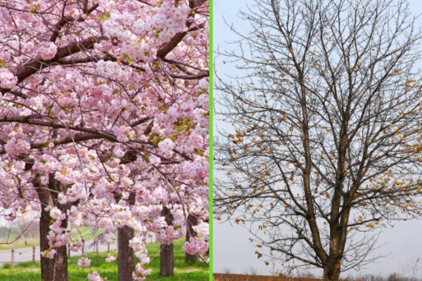 Tipos de árboles - Tipos de árboles de hoja caduca