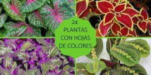 Plantas con hojas de colores