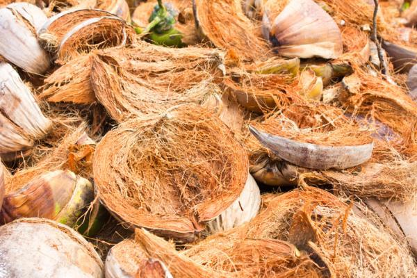 Fibra de coco para plantas: propiedades y cómo hacerla - Cómo hacer fibra de coco para plantas