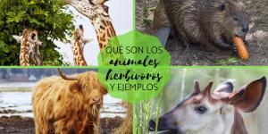 Animales herbívoros: qué son y ejemplos