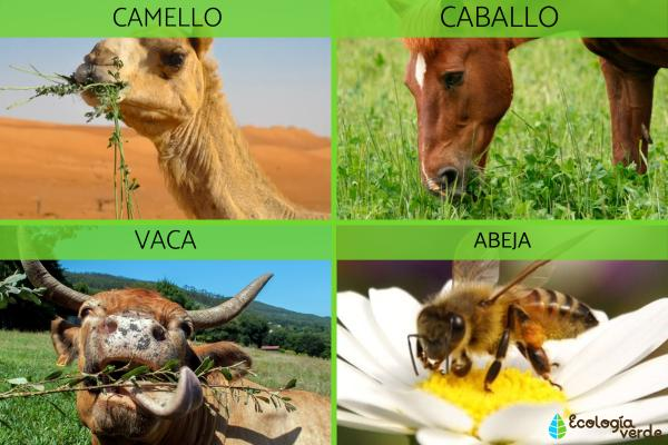 Animales herbívoros: qué son y ejemplos - Ejemplos de animales herbívoros