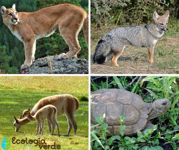 Qué es un monte - Animales del monte - ecorregión argentina