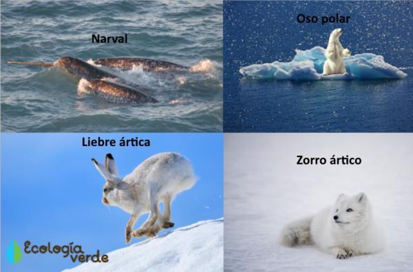 Qué animales viven en el Polo Norte y Sur - Cuáles son los animales que viven en el Polo Norte - lista