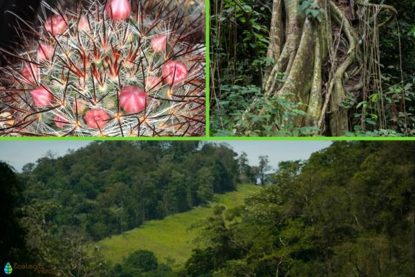 Flora y fauna de Jalisco - Flora de Jalisco