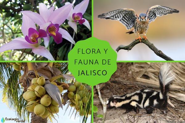 Flora y fauna de Jalisco