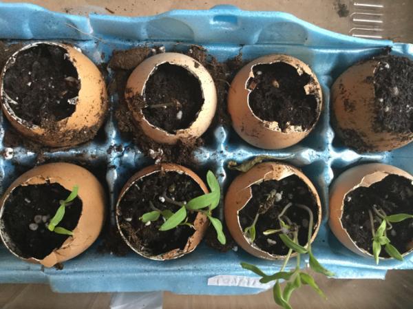 Cómo hacer un semillero - Cómo hacer un semillero paso a paso con materiales reciclados