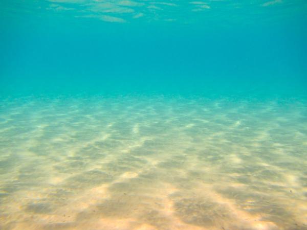 Biodiversidad marina en España - Hábitat de arenas y arenas fangosas infralitorales y circalitorales