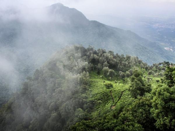 Bosques de niebla: qué son y características - Bosques nubosos en el mundo