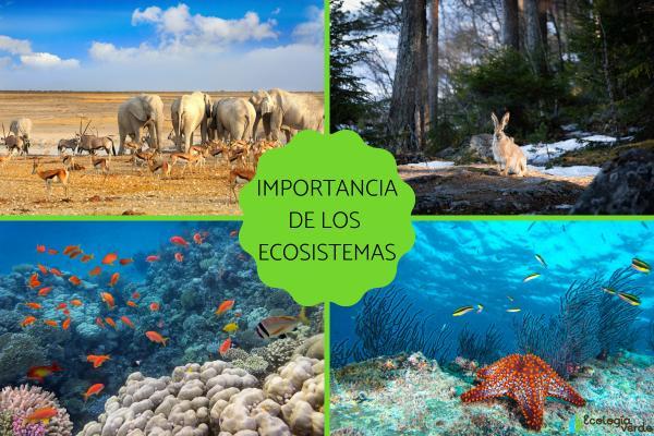 Cuál es la importancia de los ecosistemas