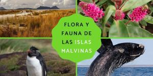 Flora y fauna de las islas Malvinas