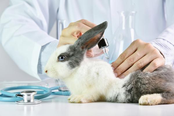Cómo saber si un producto está testado en animales - Cómo se realiza el testeo en animales