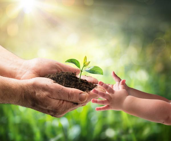 Qué es la reforestación y su importancia - Qué es la reforestación: definición sencilla