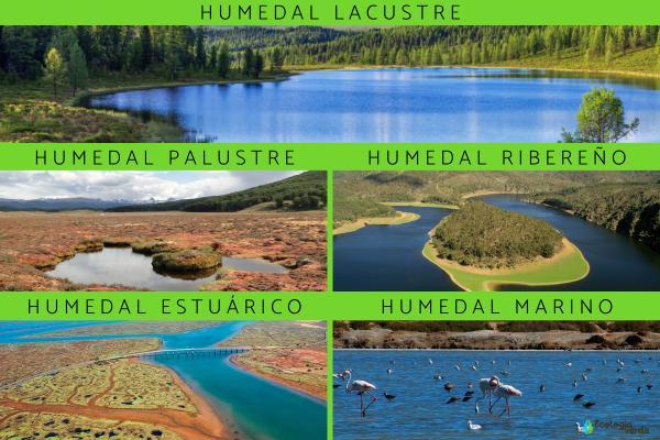 Flora y fauna de los humedales - Características de la flora y fauna de los humedales