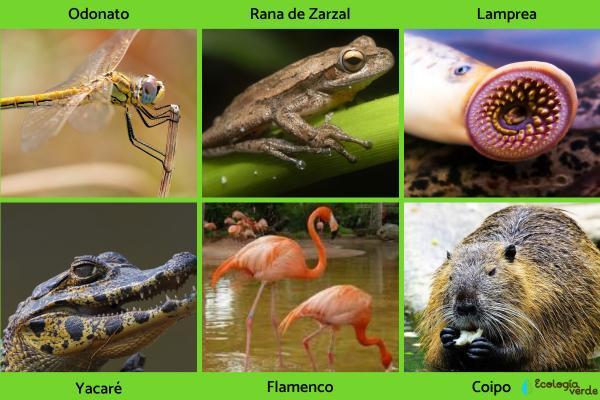 Flora y fauna de los humedales - Fauna de los humedales