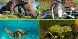 Tipos de reptiles, sus características y ejemplos