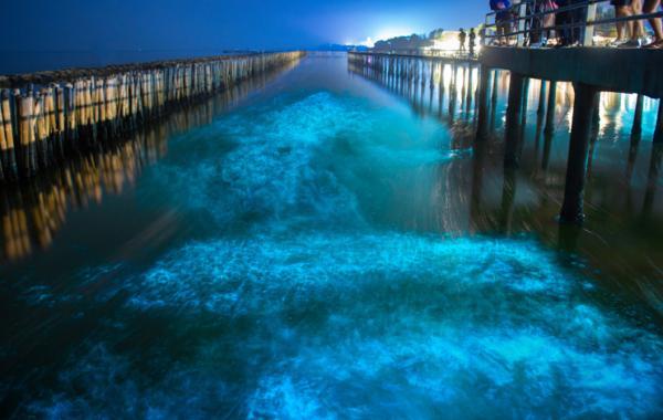 Qué es la bioluminiscencia y ejemplos - Lugares para ver bioluminiscencia