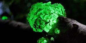 Qué es la bioluminiscencia y ejemplos