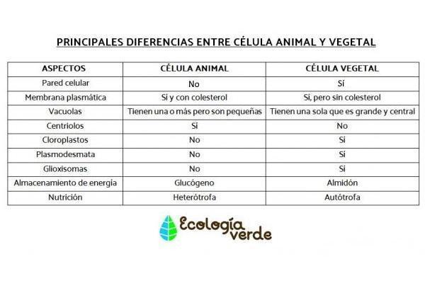 Partes de la célula animal - Diferencia entre célula animal y vegetal