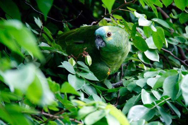 Qué animales viven en la selva tropical
