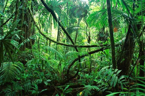 Qué animales viven en la selva tropical - Qué condiciones tienen las selvas tropicales