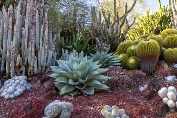 11 tipos de jardines - Jardín de secano