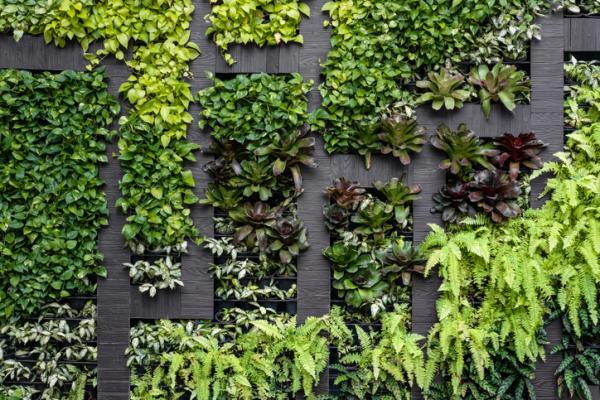 11 tipos de jardines - Jardín vertical