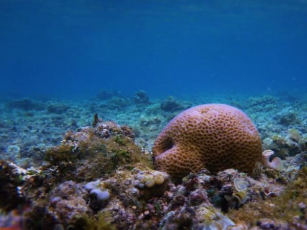 Qué animales viven más años - Las esponjas de mar viven miles de años