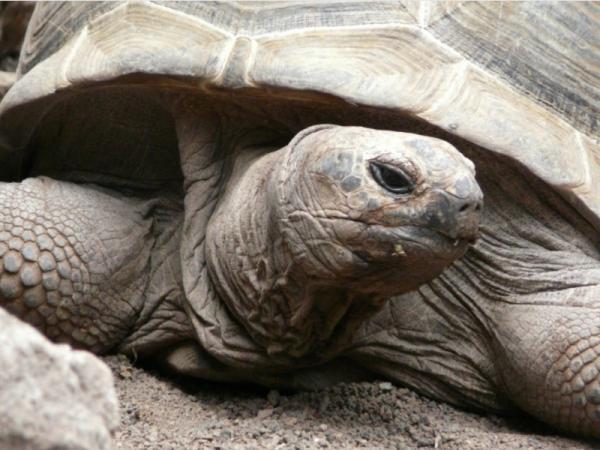 Qué animales viven más años