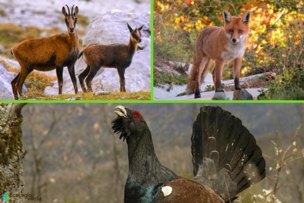 Flora y fauna de los Pirineos - Fauna de los Pirineos
