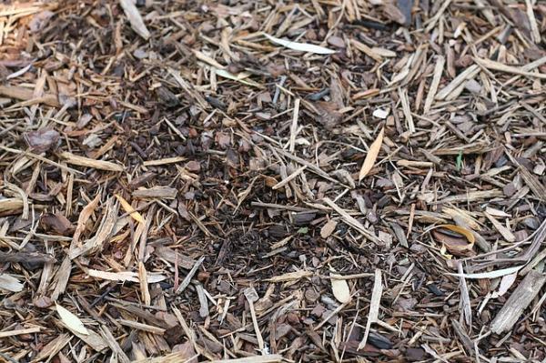 Cómo hacer un acolchado para plantas o mulching - Qué es el mulching o acolchado para plantas y sus beneficios