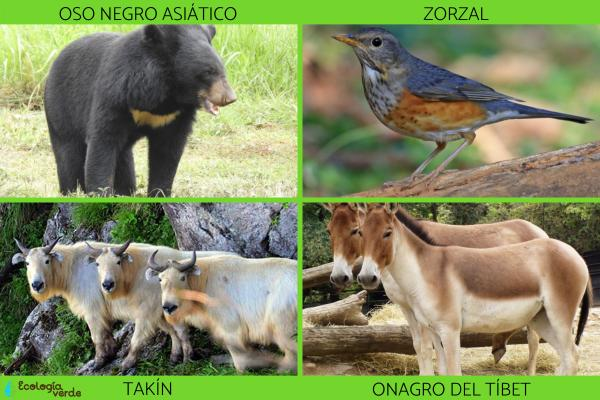 Flora y fauna de China - Fauna de China