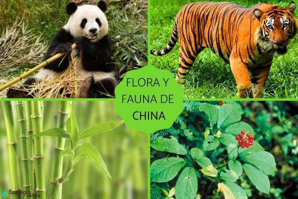 Flora y fauna de China