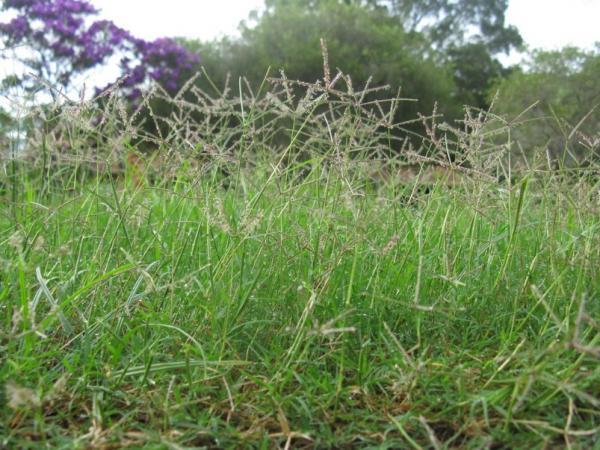 Plantar grama: cómo hacerlo - Cómo plantar grama desde semillas paso a paso