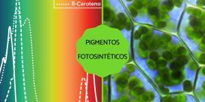 Pigmentos fotosintéticos: qué son, tipos y ejemplos