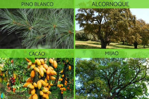 Ecosistema forestal: qué es, características, flora y fauna - Ecosistema forestal: flora