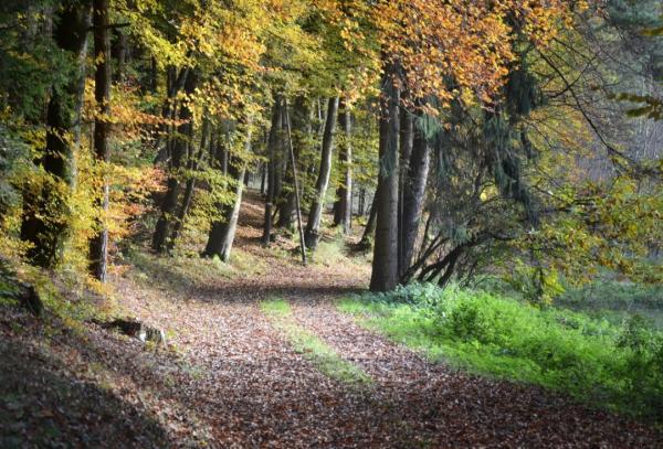 Ecosistema forestal: qué es, características, flora y fauna - Qué es el ecosistema forestal