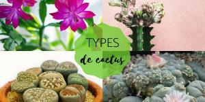 Types de cactus - Noms et soins