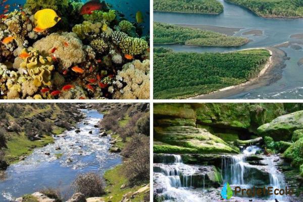 Types d'écosystèmes - Définition, classification et exemples - Écosystèmes aquatiques