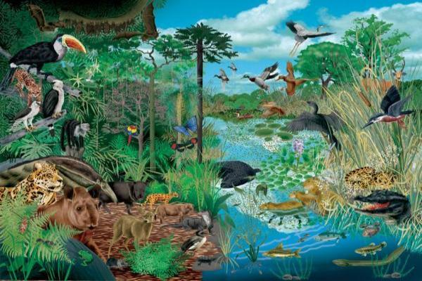 Types d'écosystèmes - Définition, classification et exemples - Qu'est-ce qu'un écosystème - Définition simple