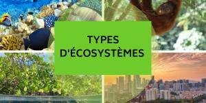 Types d'écosystèmes - Définition, classification et exemples